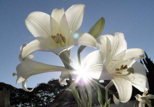 Viver como as flores